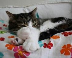 5 raisons de partager votre lit avec votre chat