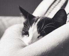 9 raisons pour lesquelles la vie est meilleure avec les chats