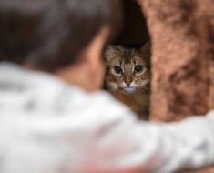 6 signes que votre chat est stressé