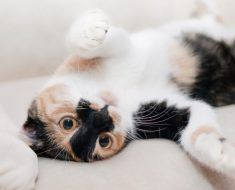 5 règles de félin parler: apprenez à communiquer avec votre chat