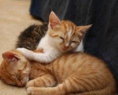 6 raisons pour lesquelles votre chat veut que vous adoptiez un autre chat