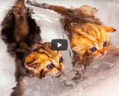 Les chatons apprennent à nager pour la première fois dans la salle de bain