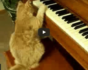 Ce chat jouant du piano comme Beethoven