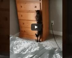 Ce chat est certainement le meilleur joueur de cache-cache au monde