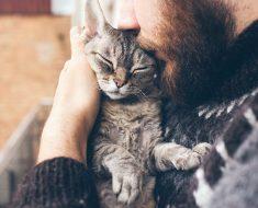 5 Signes que votre chat vous aime vraiment
