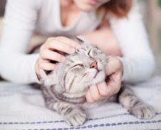 9 secrets pour garder votre chat d'intérieur heureux