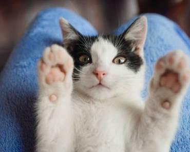 9 choses que votre chat aimerait que vous arrêtiez de faire