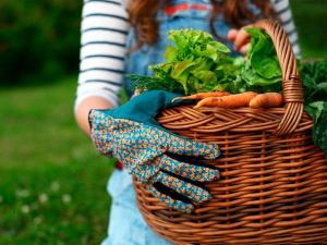 gardening-fresh-vegetables-basket-TS-162359422