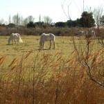 Stunning! White horses!