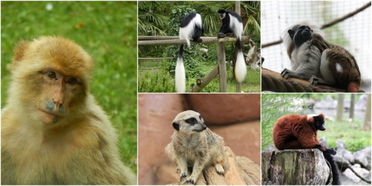 ZooParc de Beauval Variety of Smaller Animals