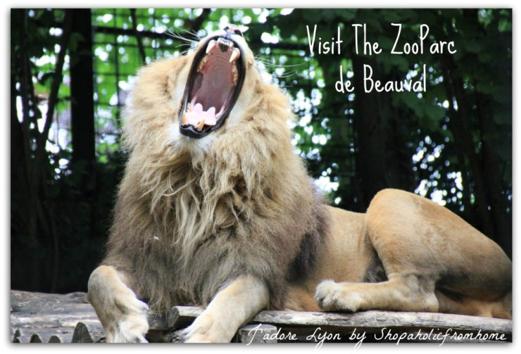 Visit The ZooParc de Beauval
