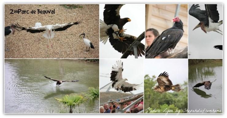 ZooParc de Beauval Birds Show