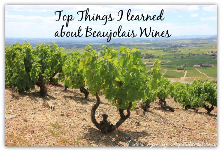 Top Things I learned about Beaujolais Wines