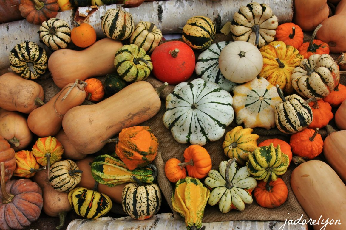 Enjoy all types, shapes of pumpkings. Only in autumn and only in Lyon!