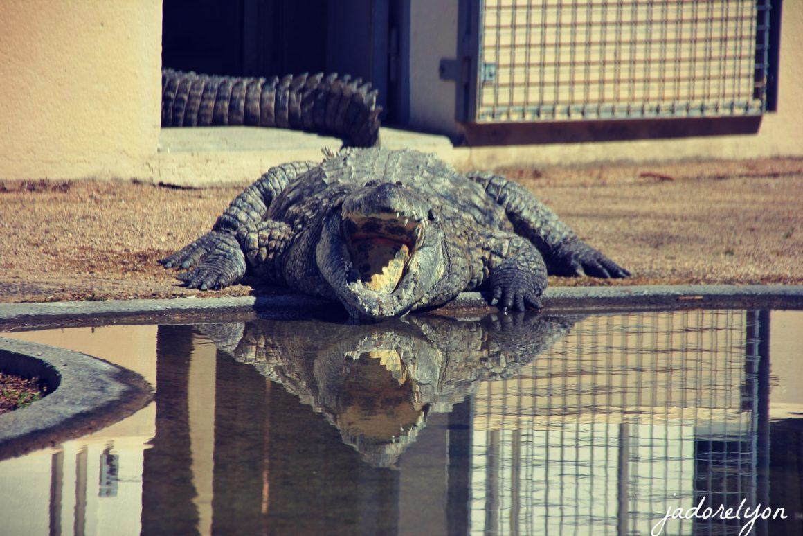 La Ferme des Crocodiles