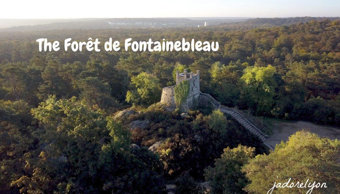 The Forêt de Fontainebleau.