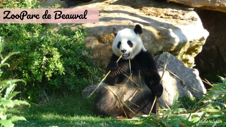 The Top 10 Zoos and Animal Parks in France!