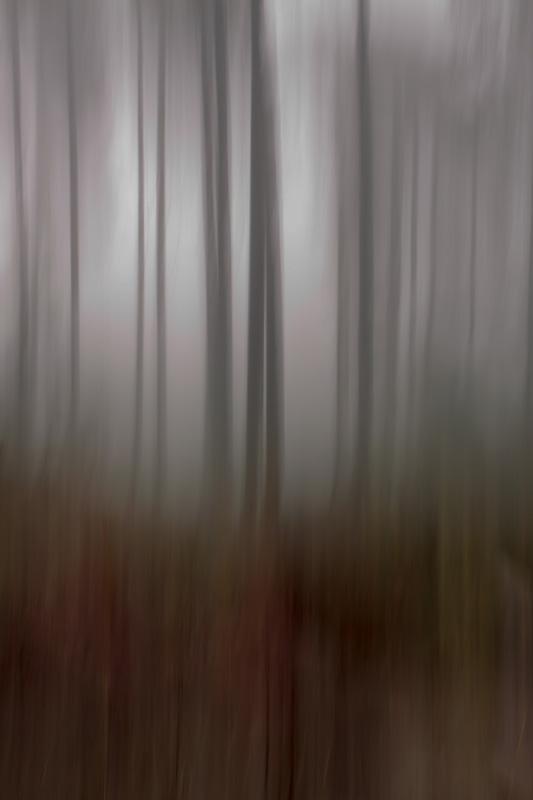 Tåke i Vassbygda _MG_3854