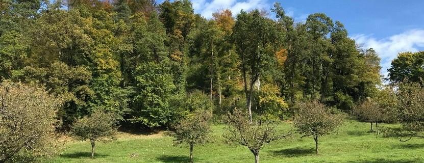 Ruine Bärenfels via @treierp