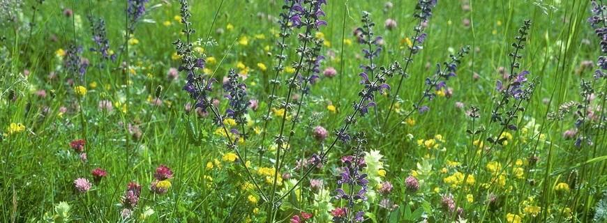 Biodiversität – wenig ist schon mal ein Anfang… via @treierp