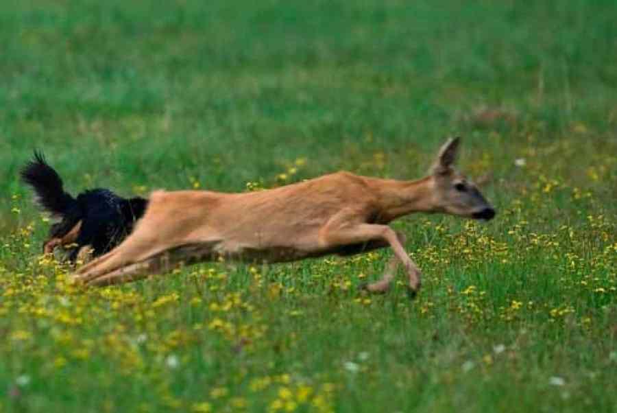 Wildtiere leiden unter dem Coronavirus