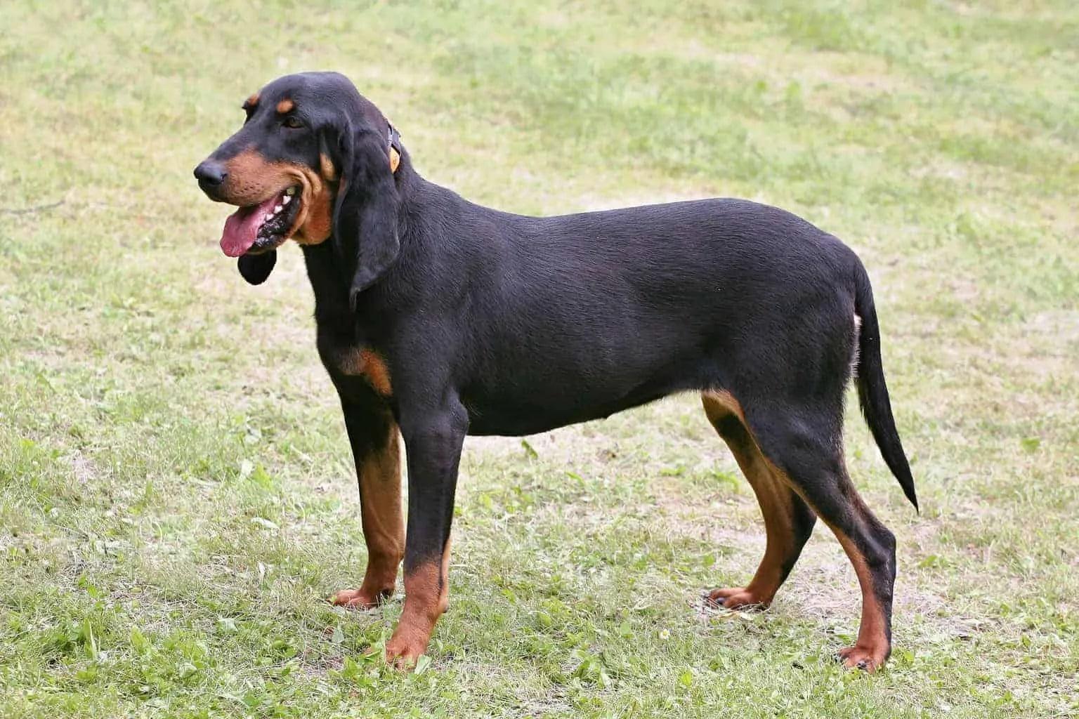 Jagdhunde - wer kennt sie?