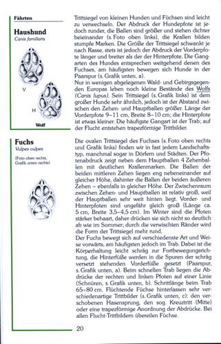 Angelika Lang, Spuren & Fährten unserer Tiere