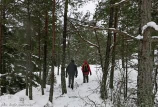 F Vandring genom skogen