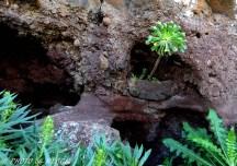 växtlighet i berg