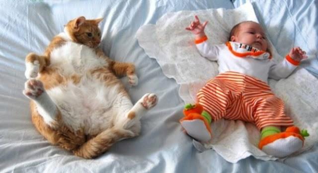 Tingkah kucing lucu meniru bayi