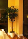 tree at home
