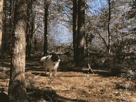 Finn the Dog in the Forest