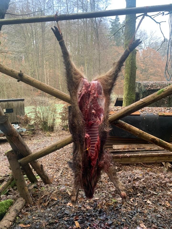 Brækket gris