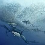 Underwater-Scenes4