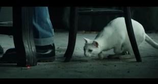 Le chat du cartel : le premier film UBISOFT signé DDB Paris