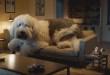 Voici Doug the Dog, le chien vraiment très très lourd 🐶