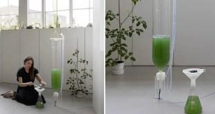 Un jardin d'algues domestiques qui connecte technologie et écologie