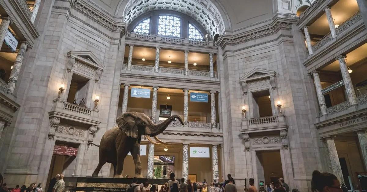 éléphant-musée