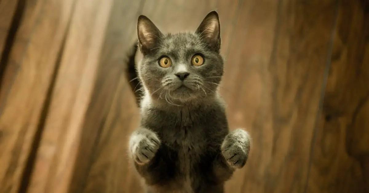 chatons-maison