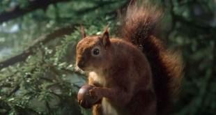 écureuil-arbes-eau-vittel
