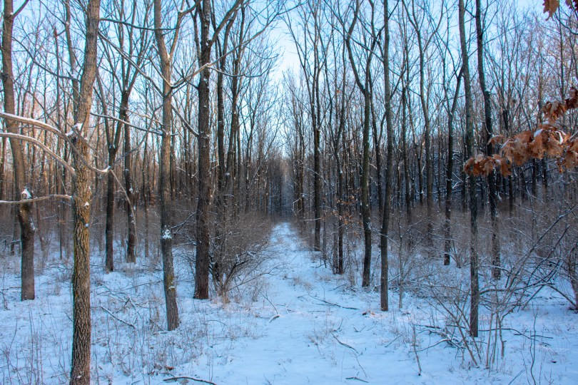 midwest winter woods