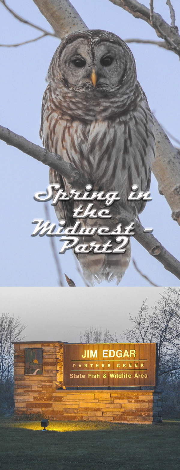 spring in the midwest pin