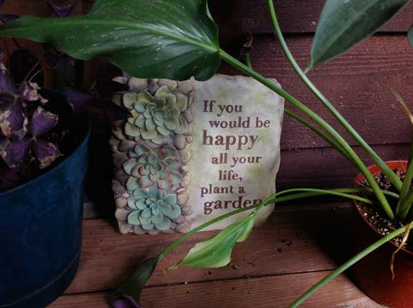 succulents plaque with quote