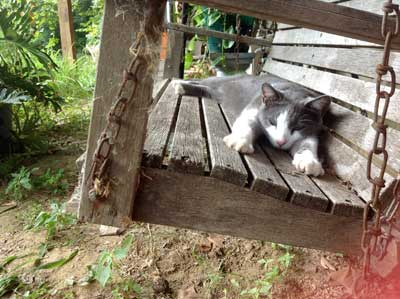 Thunder the Jungle Cat chillaxing on the swing