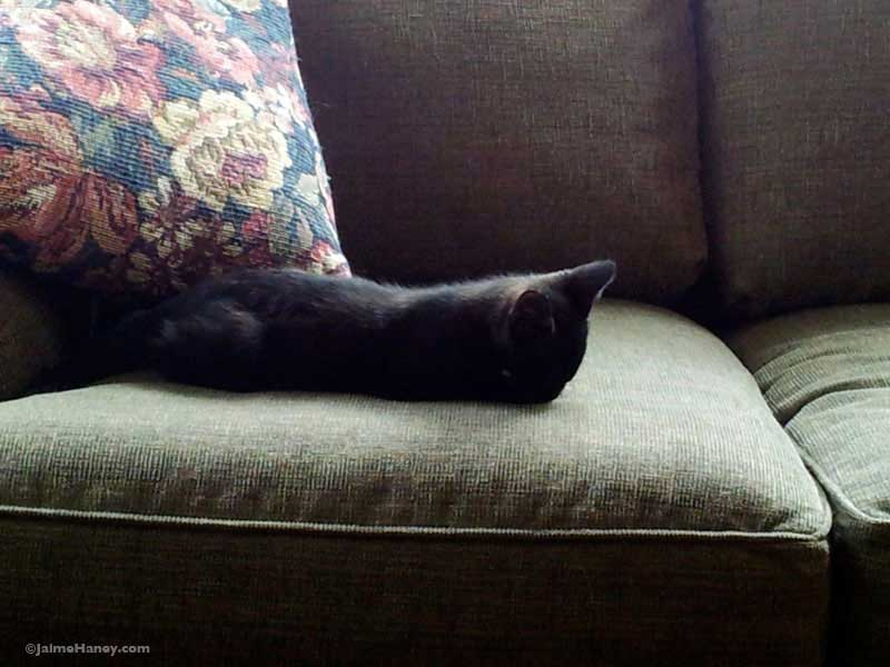 sleeping black kitten on green couch