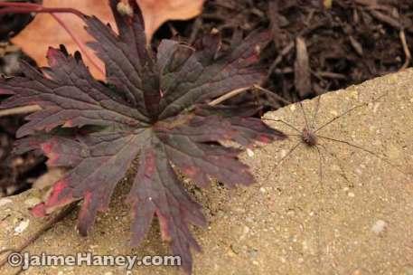 Jaime's-early-2014-fall-gardens---062