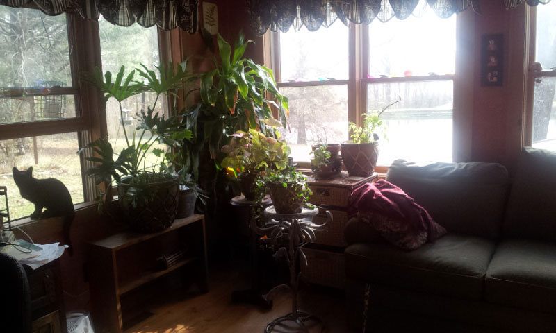 JuJu in the window. Happy Houseplants