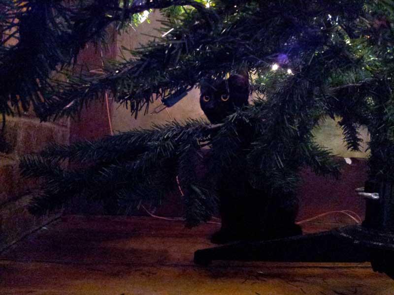 JuJu hiding under bare Christmas Tree