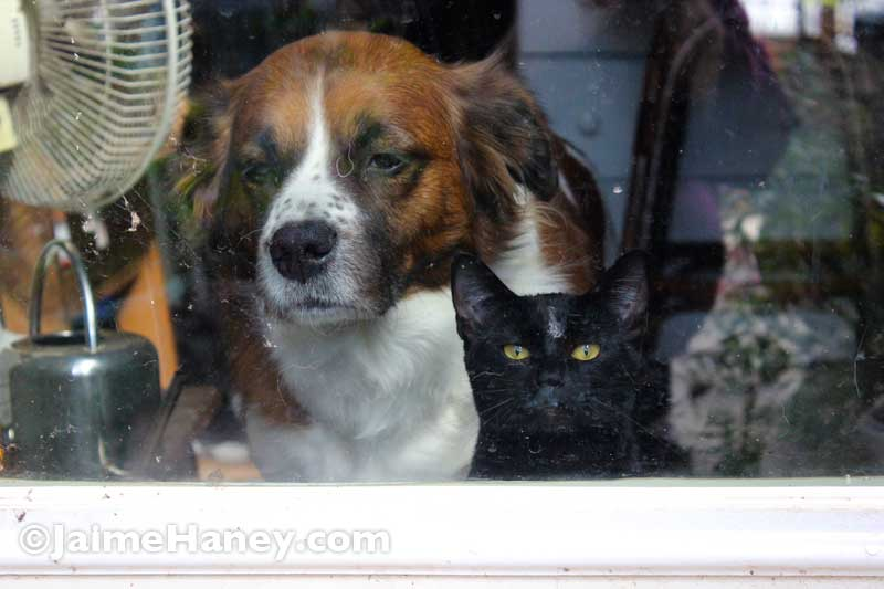 dog and black cat looking in window