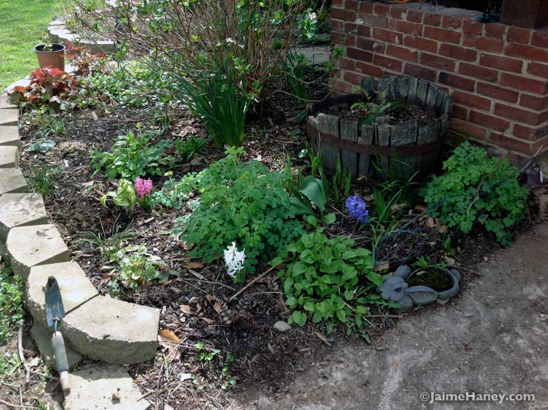 front garden vignette